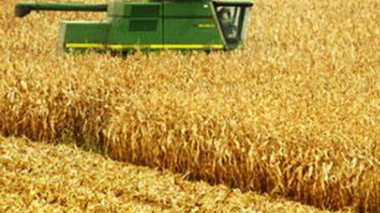 Menos dólares del campo: el precio del maíz cayó 43% en un año
