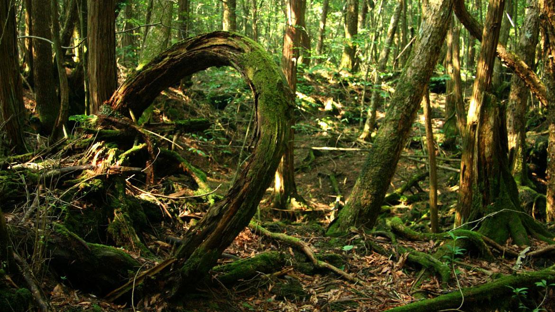 Este bosque que se encuentra en la base del Monte Fuji, Aokighara es probablemente el más famoso de los bosques en todo el Japón. Tiene más de 3.500 hectáreas y está lleno de árboles nudosos y retorcidos. Según los informes se dice que está embrujado, con leyendas de fantasmas, demonios y espíritus que rodean la zona. Lamentablemente, es también el segundo punto de suicidio más popular en el mundo. Más de 500 personas se han suicidado allí desde la década de 1950.