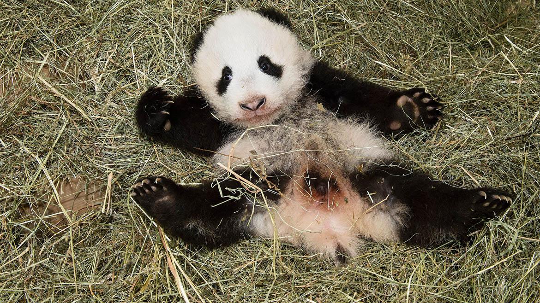 Las mejores fotos de animales.