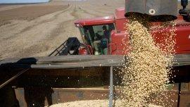 Los productores sojeros podrán volver a pedirle crédito al Banco Nación.