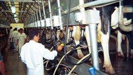 La industria lechera amenazada por una crisis de precios que no compensan a toda la cadena de valor