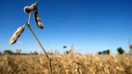 La soja llegó a negociarse a USD 316 por tonelada el 22 de septiembre último.