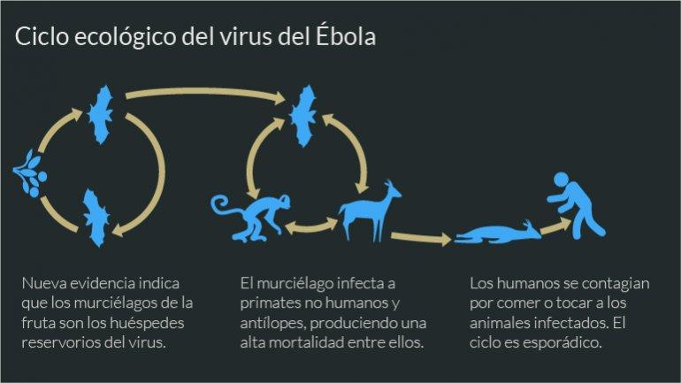 Búsqueda contrarreloj de una vacuna para frenar al ébola