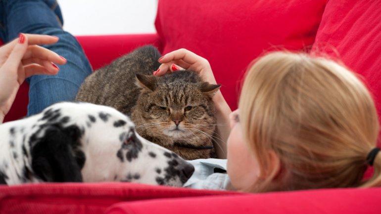 Por qu tener mascotas en casa es bueno para la salud - Mascotas originales para tener en casa ...