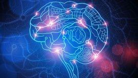 Un estudio descubrió que el consumo de cocaína produce que las neuronas se coman a sí mismas