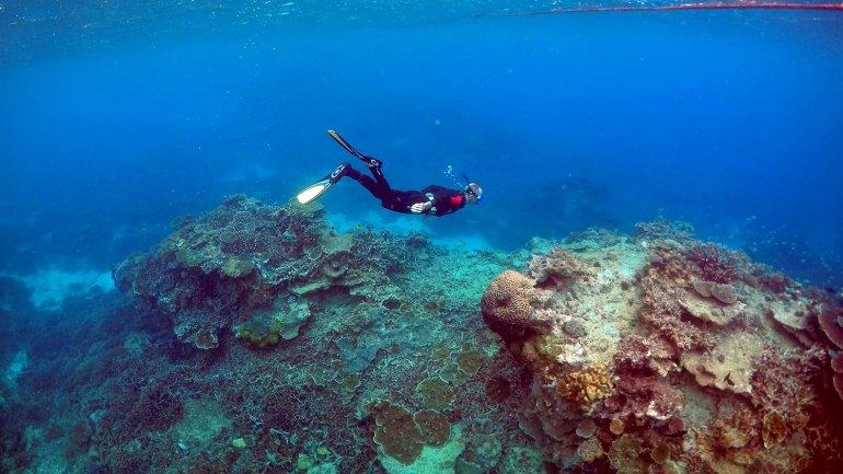 Peter Gash, propietario y gerente de la Lady Elliot Island Eco Resort, inspecciona los arrecifes <br>
