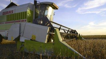 Estacional pérdida de vitalidad del agro
