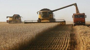 El trigo argentino vuelve a los mercados de los EEUU