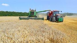 El aumento esperado en las cosechas podría neutralizar el efecto de la baja de los precios internacionales