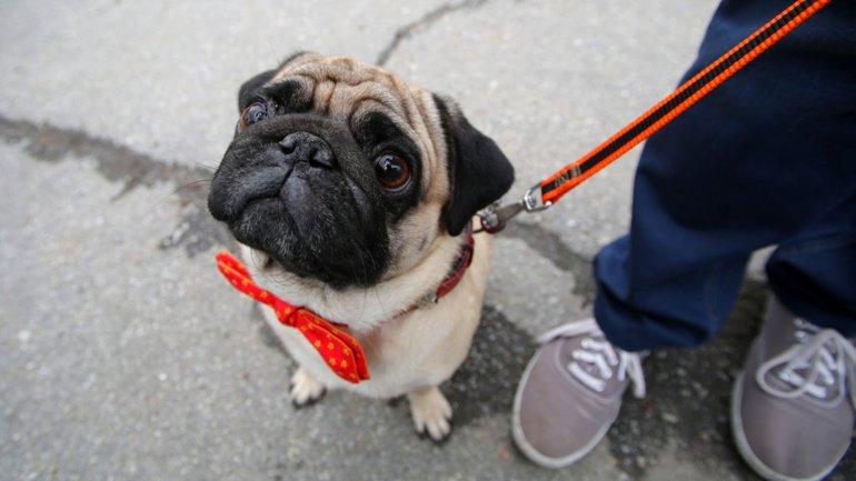 No Cometas estos errores con tu mascota!