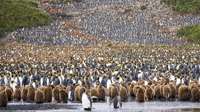 Miles de pingüinos resposando tranquilos en la Antártida