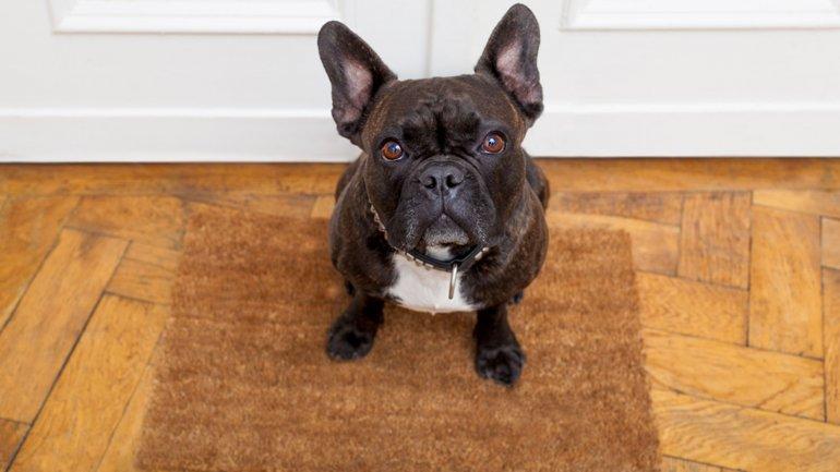 5 errores que provocan que los perros odien bañarse