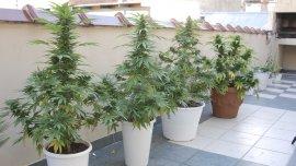 Alcides encontró en la marihuana una cura para sus dolencias crónicas (Foto de archivo)