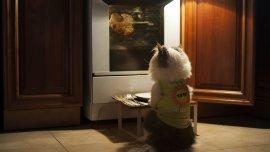 Los gatos pueden encontrar nutrientes en muchas comidas de humanos.