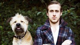 Ryan Gosling junto a George, un lobero irlandés