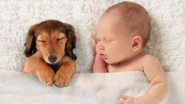 El vínculo entre bebés y mascotas, más fuerte que nunca