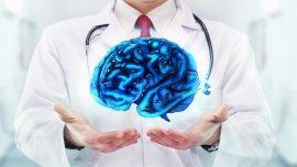 El cerebro forma parte del centro de control de todo el cuerpo