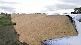 La empresa Cargill sufrió un ataque de desconocidos: se perderá gran parte de unas 9.000 toneladas de soja