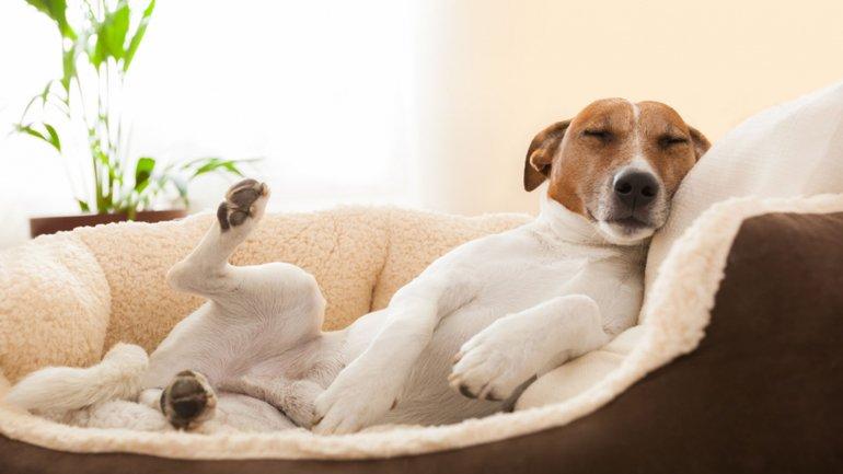 ¿Los perros deben dormir en la misma cama que su dueño?