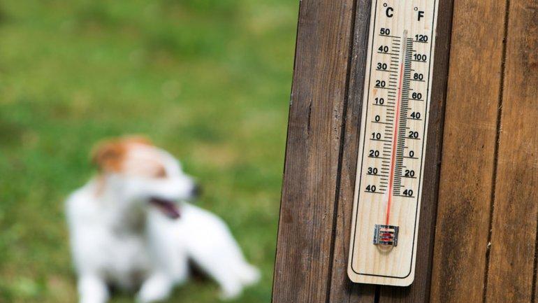 Golpe de calor en mascotas, evitalos!