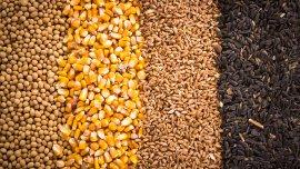 Los cereales tienen un alto valor nutritivo y un bajo contenido de grasas