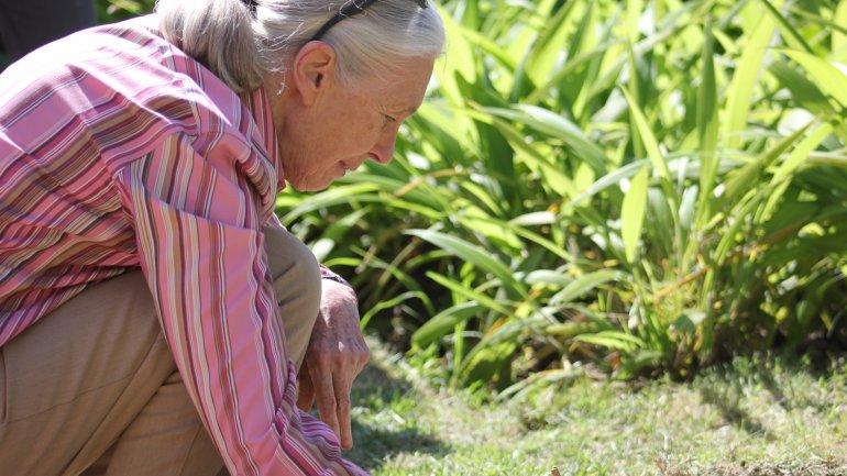 La británica Jane Goodall dedica su vida a cuidar el planeta