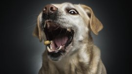 El fotógrafo alemán buscó contar historias con las expresiones de las mascotas