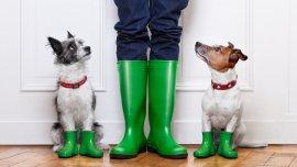 Las personas buscan rasgos de personalidad en las mascotas similares a los suyos