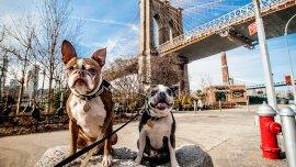 En Frisco, los perros tienen su lugar en el mundo