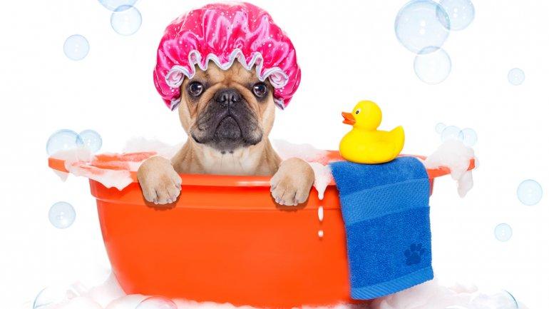 Cinco errores que provocan que los perros odien bañarse