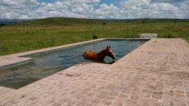 Tequila, el caballo que decidió refrescarse frente a las altas temperaturas