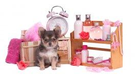 Un cachorro necesitará accesorios básicos cuando se incorpore al hogar