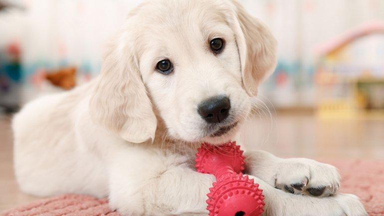 Por qué llevar un perro a la oficina mejora el rendimiento