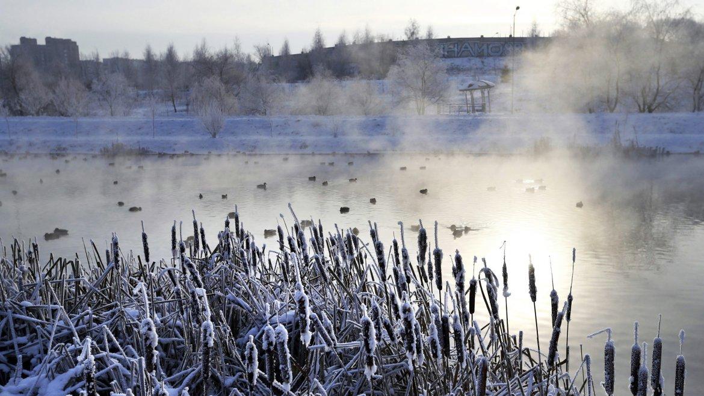 Vista de una bandada de patos en un estanque humeante en las afueras de Minsk, Bielorrusia, donde la temperatura llegó a los 15° bajo cero