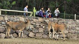 Son 17 los animales muertos en el zoológico de Mendoza desde diciembre.