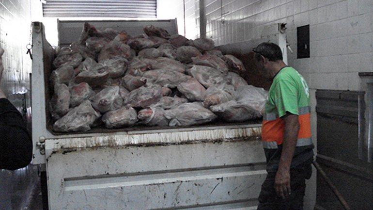 En el frigorífico había 4 mil kilos de carne de cerdo en mal estado
