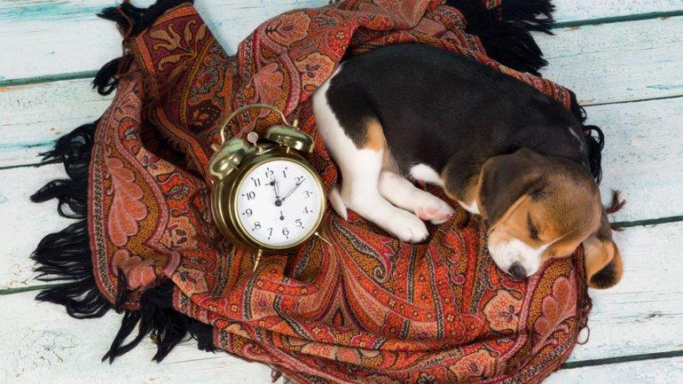 Un cachorro deberá tener horarios y una rutina de comida, juegos y sueño