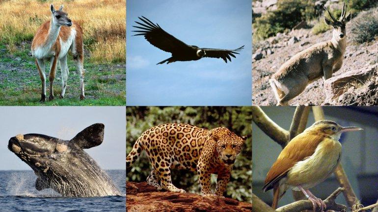 Los animales, protagonistas de los nuevos billetes.