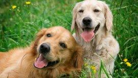 ¿Hay perros más alegres que otros?