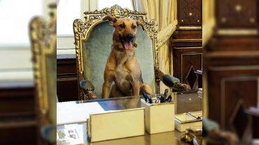 La foto en el sillón de Rivadavia que llevó a la fama al perro presidencial