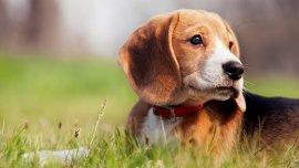 Los nombres de las razas pueden surgir por el origen del perro o por características físicas