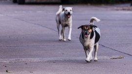 La cantidad de perros sin control pasó de 28.000 a 41.000 entre 2012 y 2016