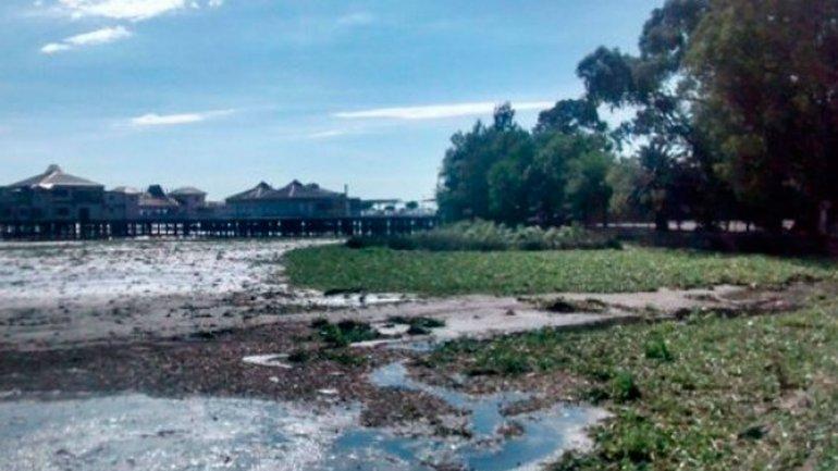 La ribera de Quilmes permanece cerrada por la invasión de camalotes