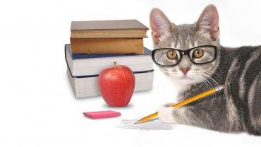 Los dueños de gatos, ¿más nerds?