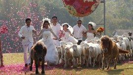 Una pareja tailandesa se caa entre animales y pétalos de rosas en Tailandia.