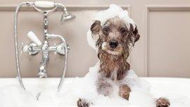 Es importante elegir el shampoo correcto para una piel saludable del perro