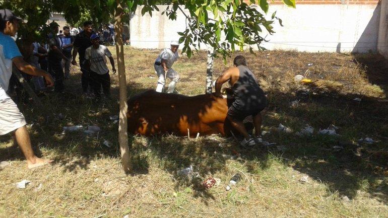 El toro fue capturado en la intersección de las calles Uruguay y Urquiza