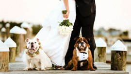Los perros en los casamientos, cada vez más sofisticados