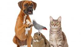 En el mundo, el Día del Animal se celebra cada 4 de octubre