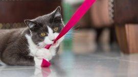 Es importante dejar que los gatos jueguen y se cansen en su diversión
